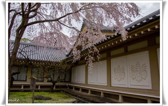 醍醐寺504073