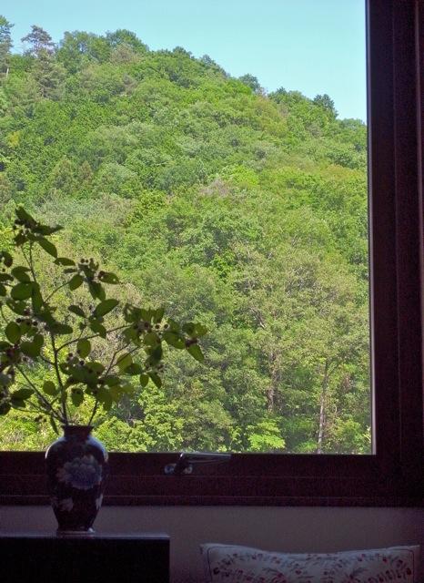 0528 窓ジューンベリー