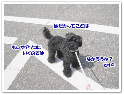 IMG_2084 (450x338)