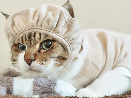「猫の帽子。」-1