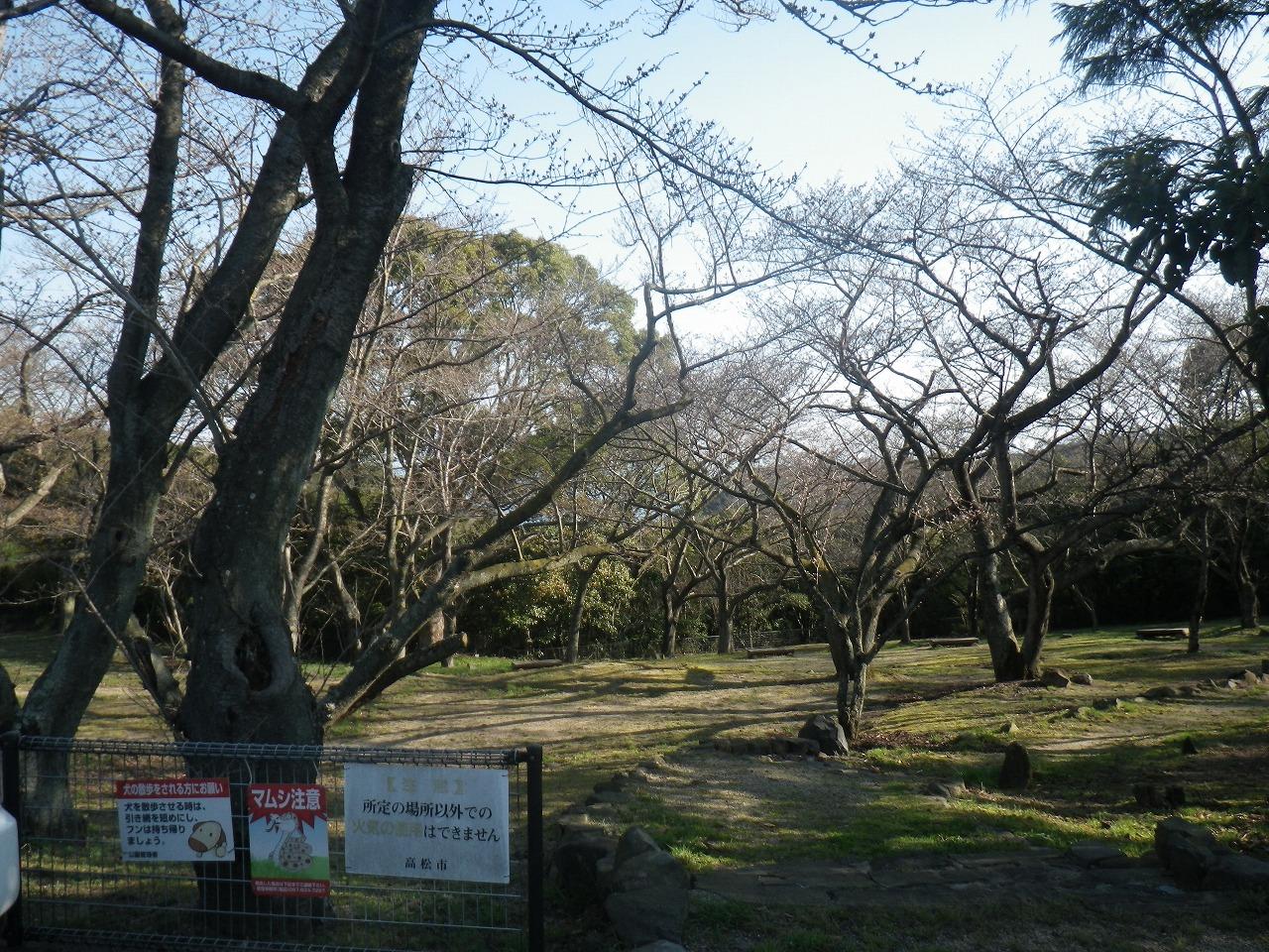 峰山の桜スポットNo1①