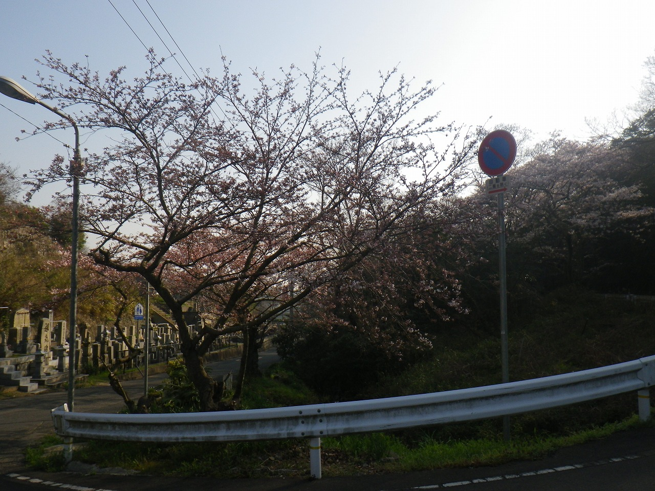 標準木20150331
