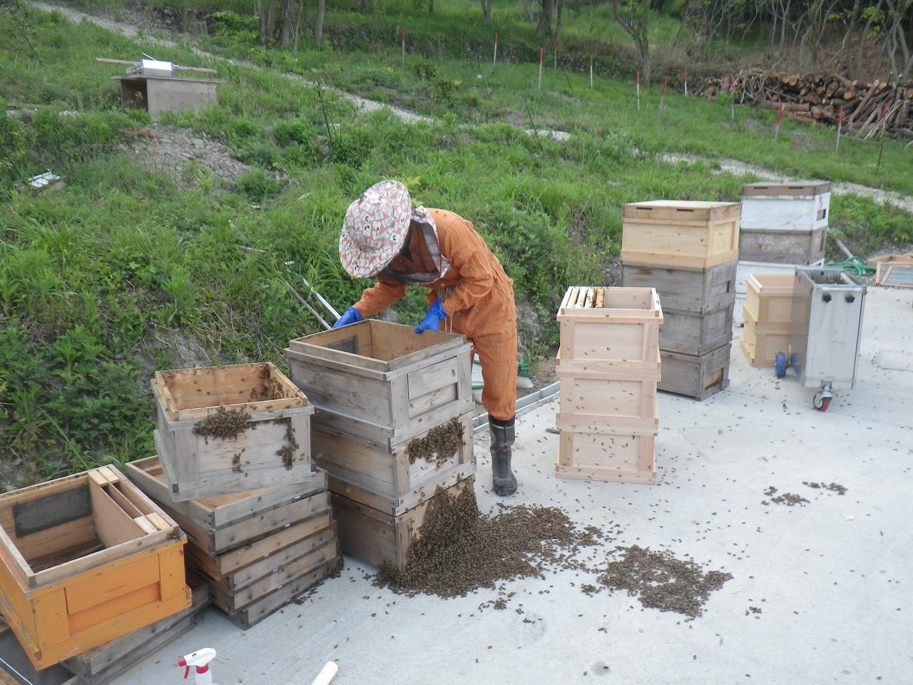 ふるった蜂の集団