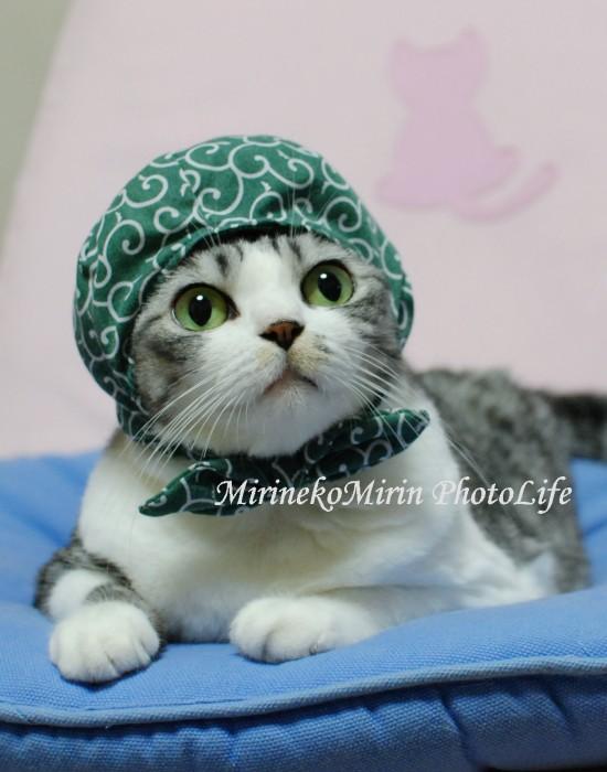 2008泥棒猫ミリン1