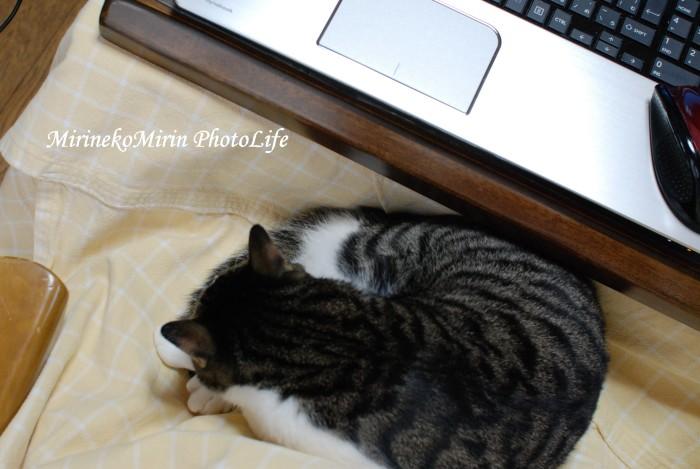 20150117ココお膝猫