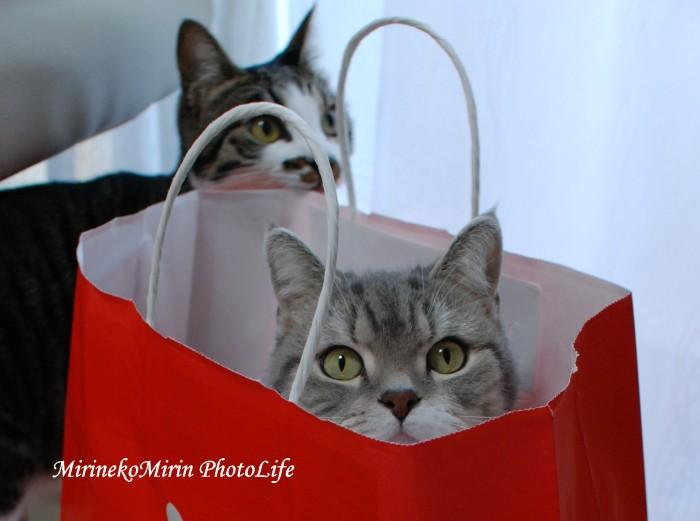 20150122袋猫