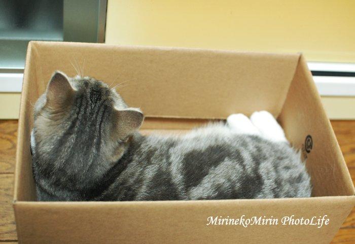 20150609箱猫まりん