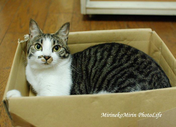 20150609箱猫ココ