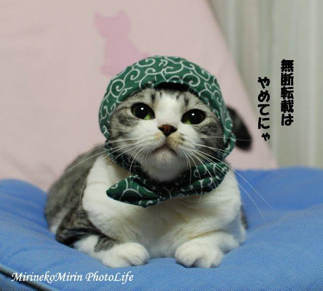 20080812泥棒猫ミリン2