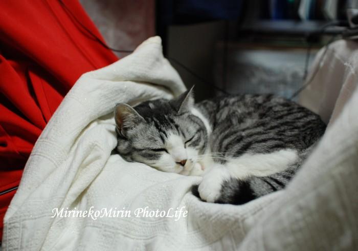 20090404ミリンお膝猫
