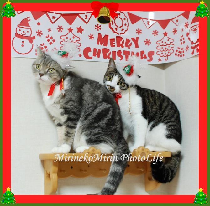 20141130まりココのクリスマス