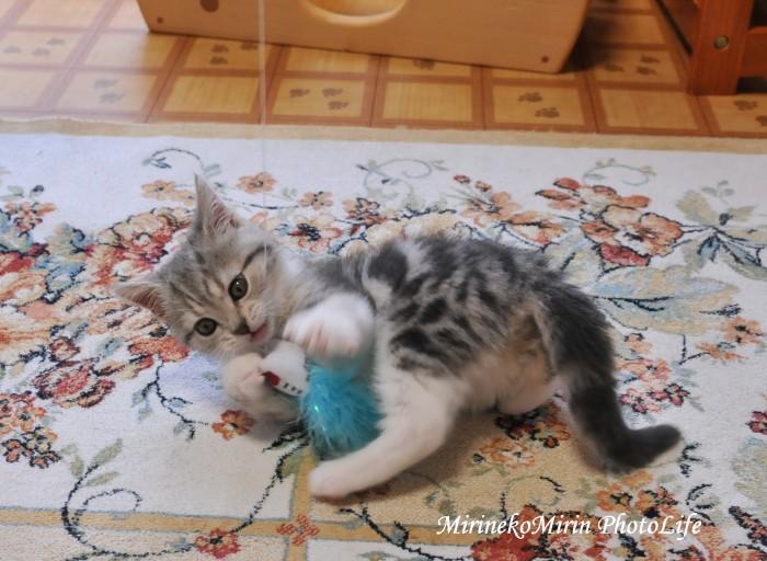 20110305子猫まりん