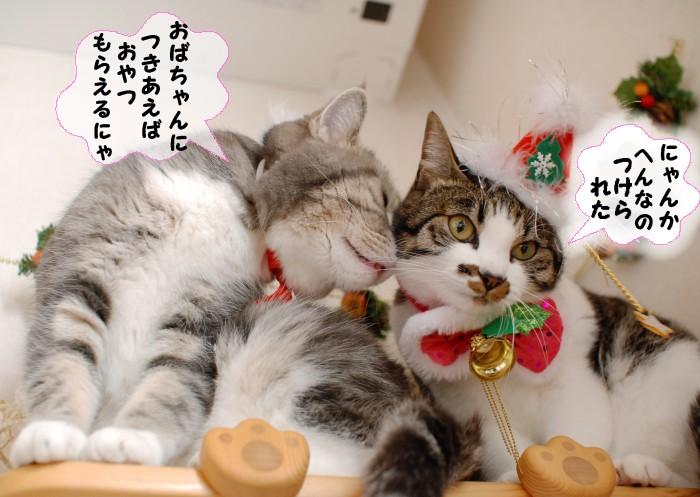 20141225クリスマスまりココ