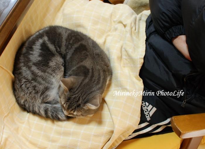 20150104まりん猫団子