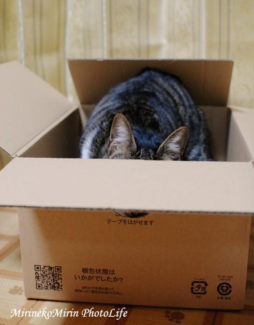 20150208箱猫ココ2