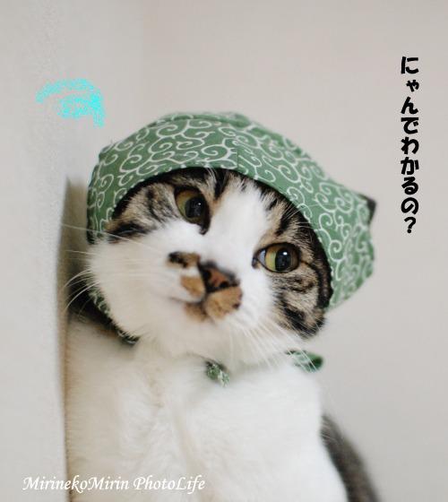 20150315泥棒猫