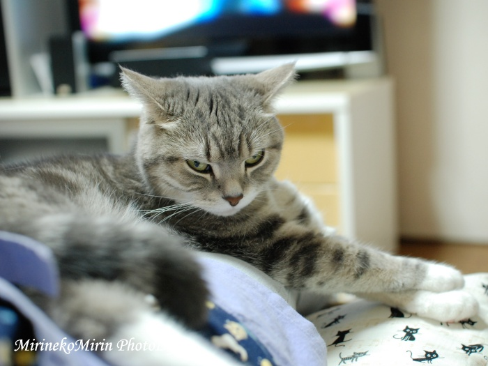 20150521お膝猫2