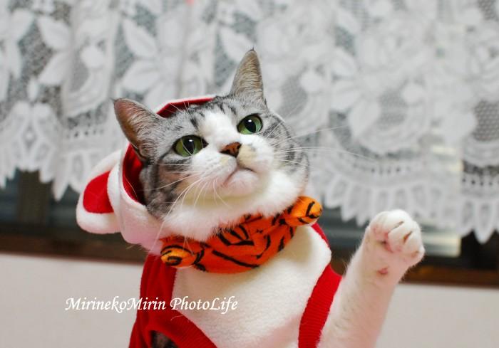 20091208招き猫ミリン