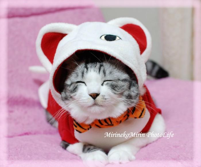 20091208福猫にまにまミリン