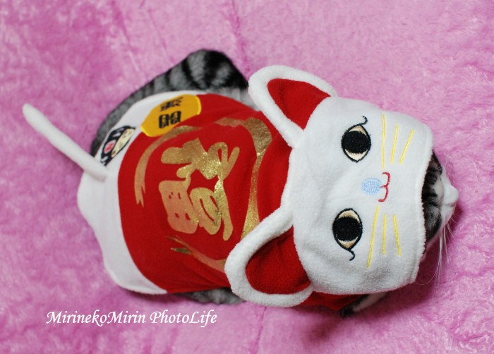 20091210福猫ミリン1