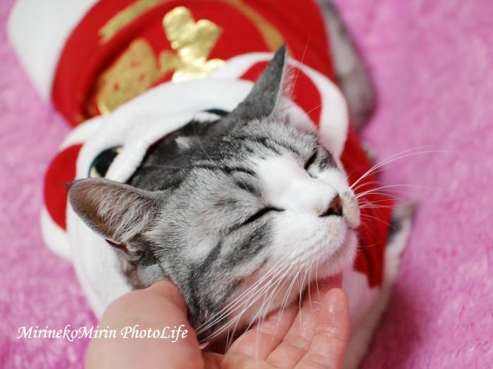 20091211福猫ミリン2