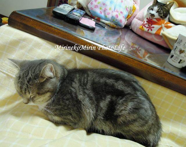 20150108まりんお膝猫