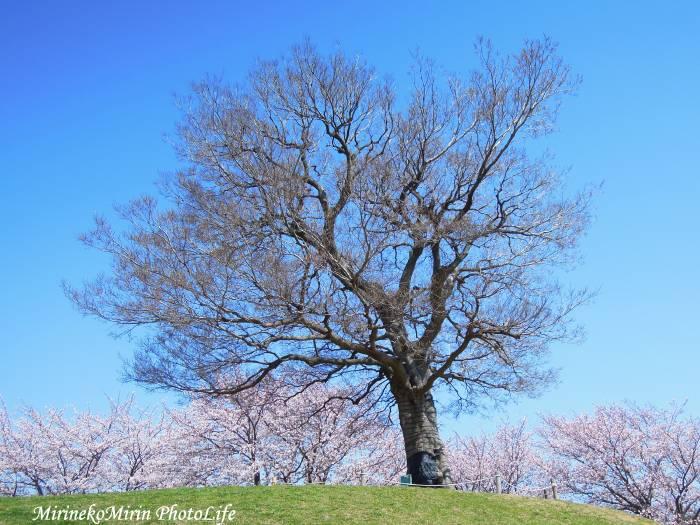 20150331からっぽの木