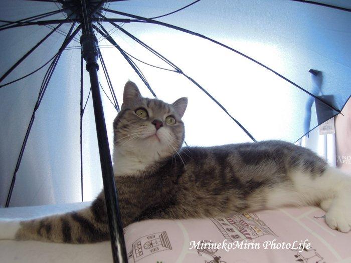 20150423まりんと傘