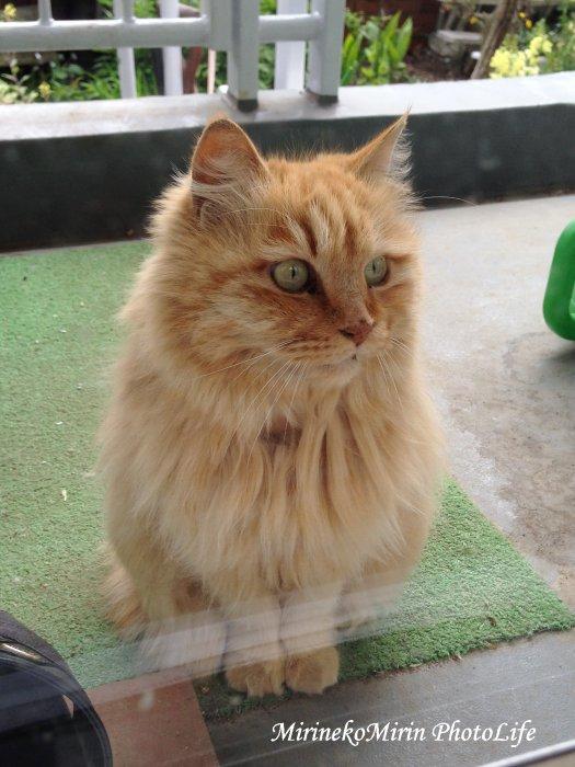 20150419長毛猫さん