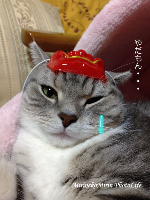 20140129おに猫まりん1