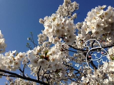 花咲かアザラシ