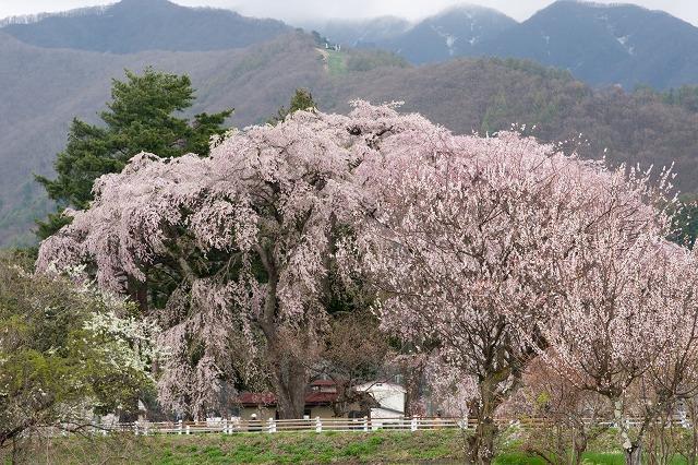 inawasiroα700140502011