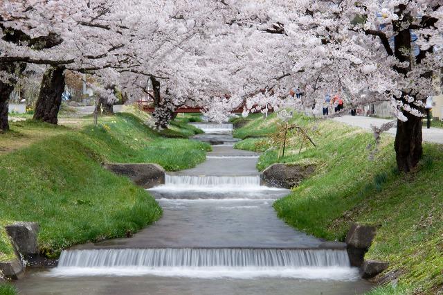 inawasiro140502001.jpg