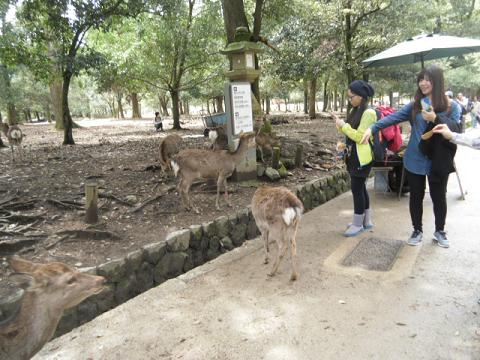 15 鹿にセンベイをやる中国の女性たち