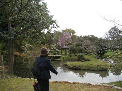 21緑の中の桜はよろしいなぁ・・・