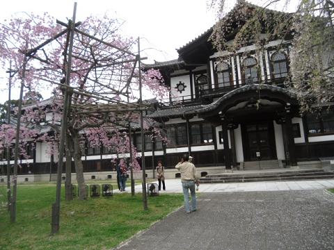 23 前面から見た研究センターと枝垂桜
