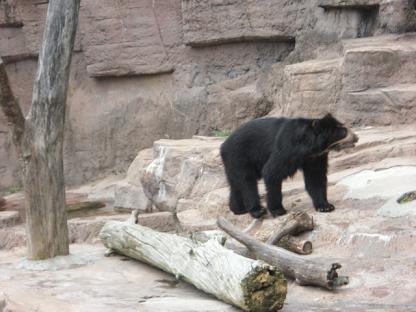8 となりの「めがね熊」はお客さんが少なくてヒマそう