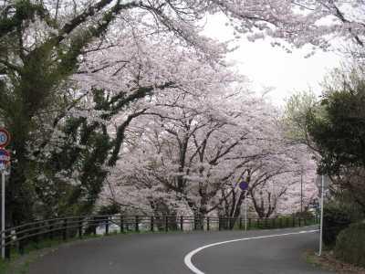 IMG_4196ケーブル駅舎の満開の桜