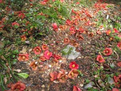 IMG_4223藪椿の多い沢です