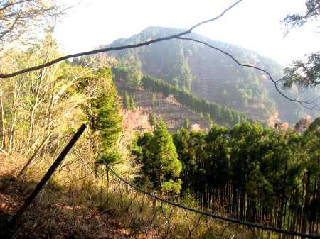IMG_4386彦見岳を前にネット沿いに歩きます