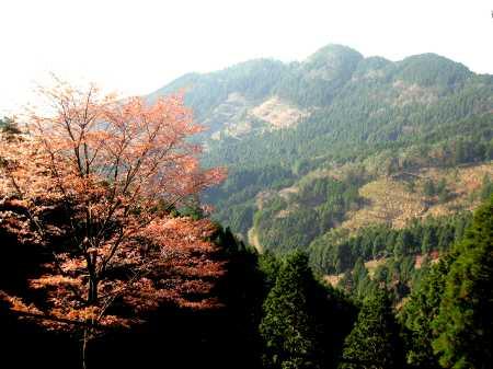 IMG_4394山桜と釣鐘山を振り返る