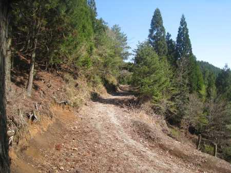 IMG_4422 縦走路よりすぐ下に延びた作業路