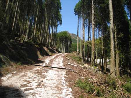 IMG_4454舗装林道を一気に下る