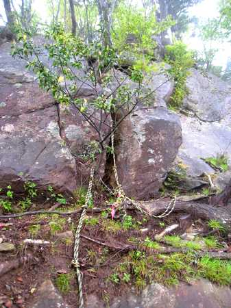 IMG_4603ロープのある岩場8:39