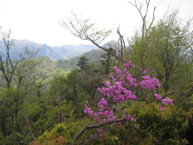 IMG_4693正面に木山内岳を望みます