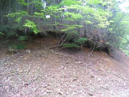 IMG_4718奥ケ迫林道、桑原山登山口に下山、正面に朽ちけた梯子が見えますか、この林道の最奥は七年山から桑原山