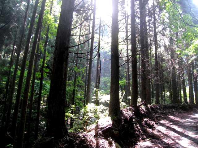 IMG_4991 朝日の差し込む林道