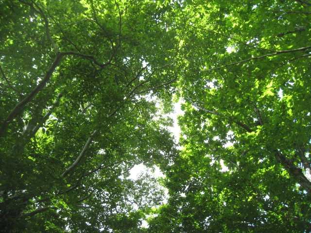 IMG_5016緑のカーテンに囲まれた山頂です