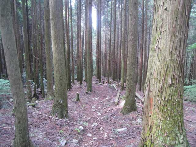 IMG_5082林道に降りてショートカットコースを下ります