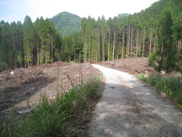 IMG_5089伐採された舗装道を下ります